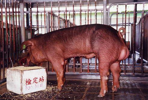 中央畜產會200311期D1710-10拍賣照片