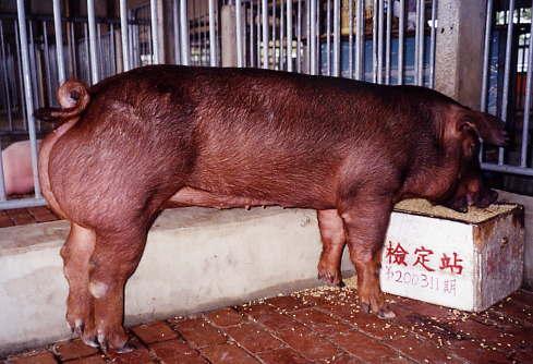 中央畜產會200311期D1732-10拍賣照片