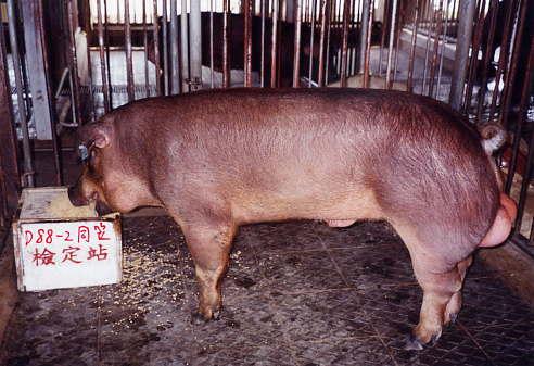 中央畜產會200312期D0088-02拍賣照片