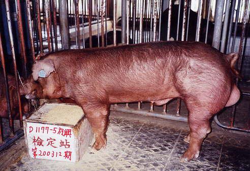 中央畜產會200312期D1177-05拍賣照片