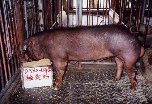 中央畜產會200312期D1760-01拍賣照片