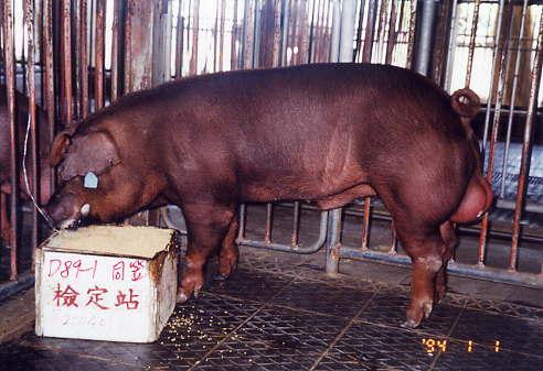 中央畜產會200401期D0089-01拍賣照片