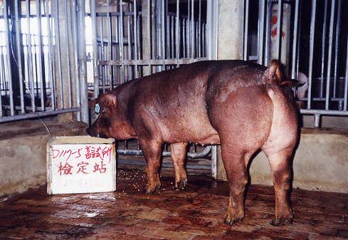 中央畜產會200401期D0117-05拍賣照片