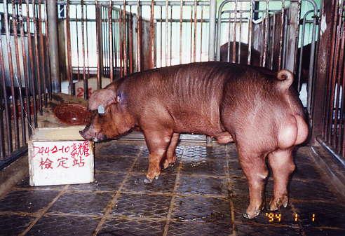 中央畜產會200401期D0442-10拍賣照片