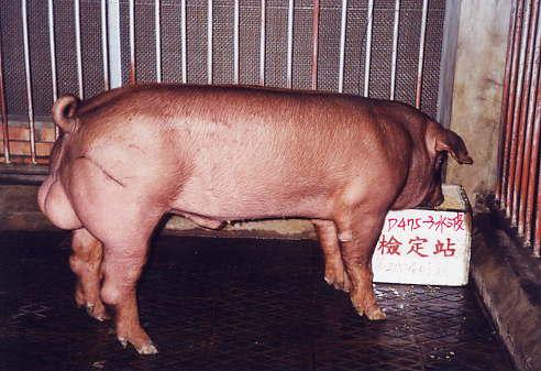 中央畜產會200401期D0475-03拍賣照片