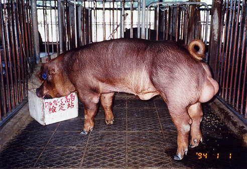 中央畜產會200401期D1076-05拍賣照片