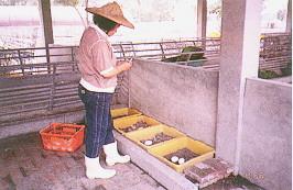 資料收集 - 種蛋登記(畜產種原庫及基因交流p84)