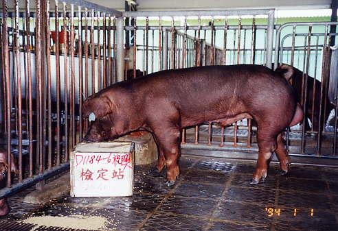 中央畜產會200401期D1184-06拍賣照片