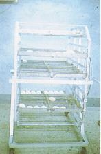 資料收集 - 種蛋保存(畜產種原庫及基因交流p84)
