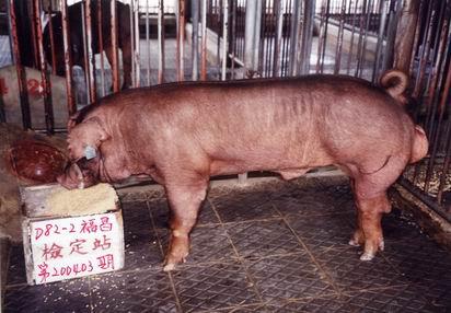 中央畜產會200403期D0082-02拍賣照片