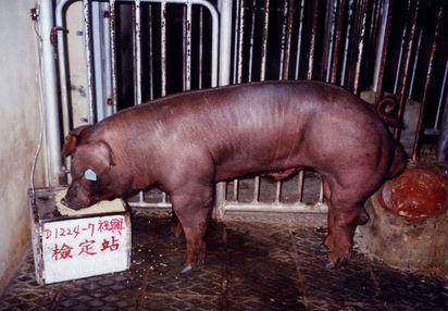 中央畜產會200403期D1224-07拍賣照片