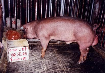 中央畜產會200403期D1965-02拍賣照片