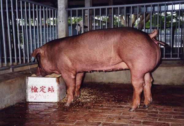 中央畜產會200405期D0122-10拍賣照片