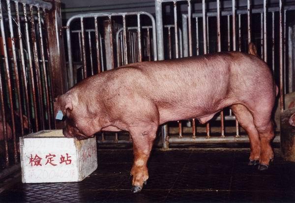 中央畜產會200405期D0424-01拍賣照片
