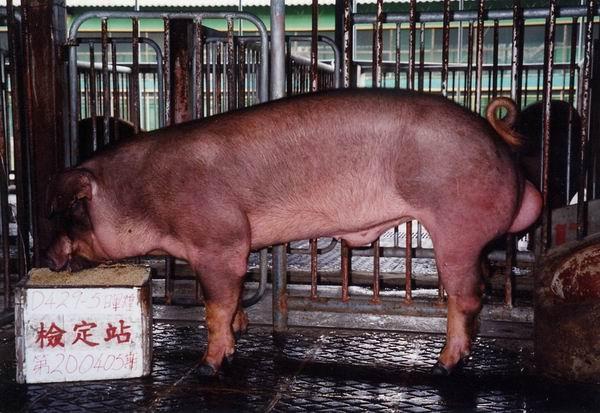 中央畜產會200405期D0429-05拍賣照片
