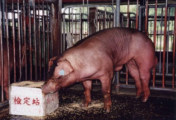 中央畜產會200405期D0717-09拍賣照片