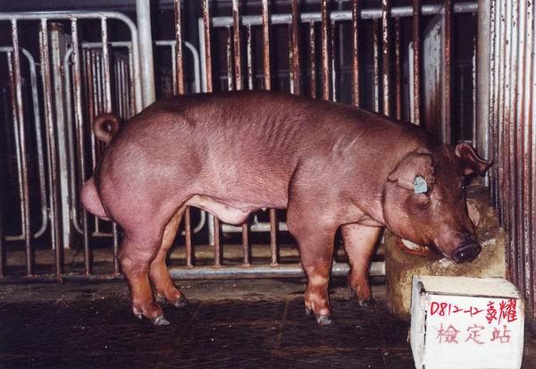 中央畜產會200405期D0812-12拍賣照片