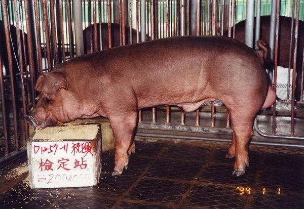 中央畜產會200405期D1257-11拍賣照片