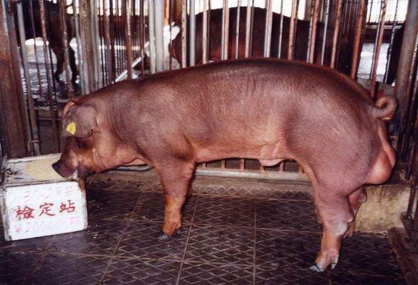 中央畜產會200406期D0130-02拍賣照片