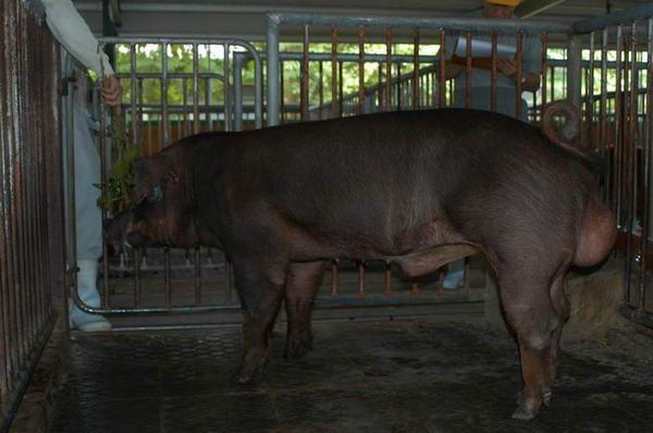 中央畜產會200406期D0164-02體型-全身相片