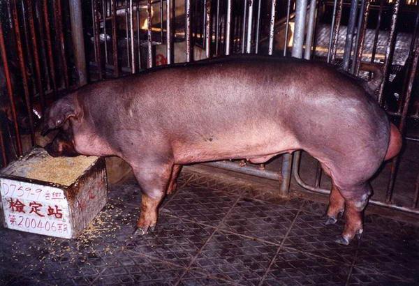 中央畜產會200406期D0759-09拍賣照片
