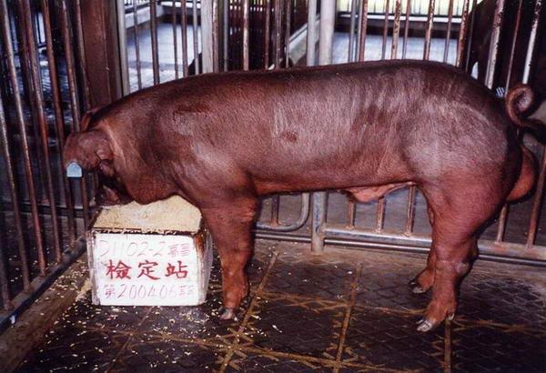 中央畜產會200406期D1102-02拍賣照片