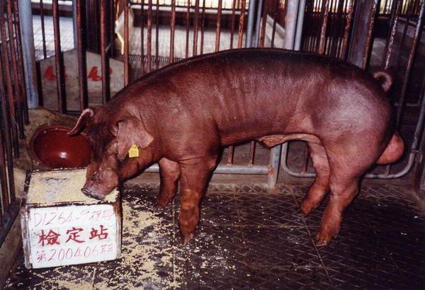 中央畜產會200406期D1264-09拍賣照片