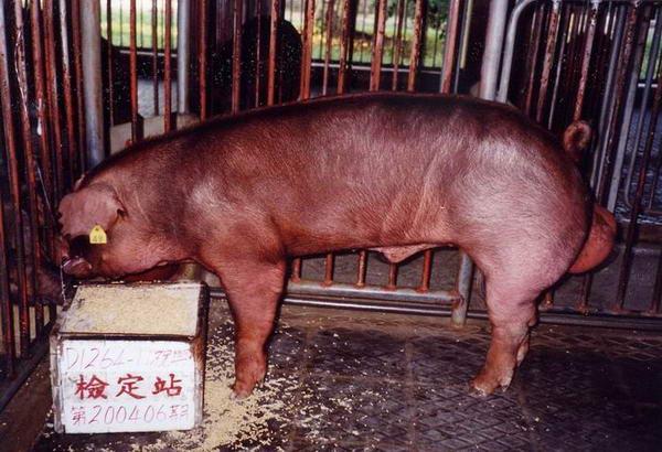 中央畜產會200406期D1264-11拍賣照片
