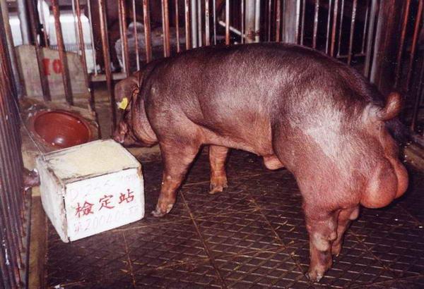 中央畜產會200406期D1265-09拍賣照片