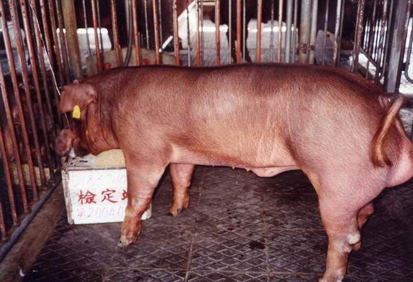 中央畜產會200406期D1857-10拍賣照片