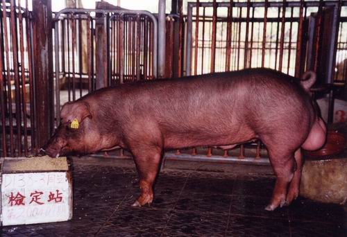 中央畜產會200407期D0138-03拍賣照片