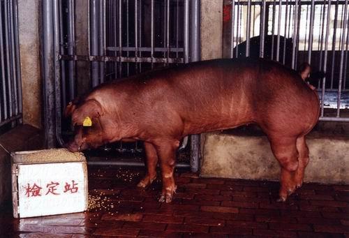 中央畜產會200407期D0211-12拍賣照片