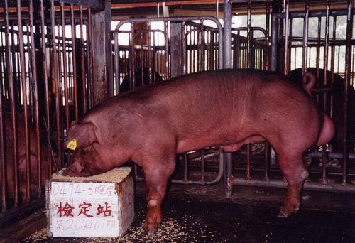 中央畜產會200407期D0474-06拍賣照片