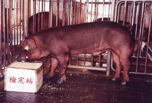 中央畜產會200407期D0573-06拍賣照片