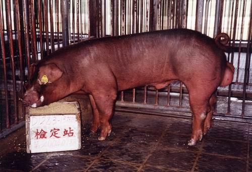 中央畜產會200407期D1283-13拍賣照片