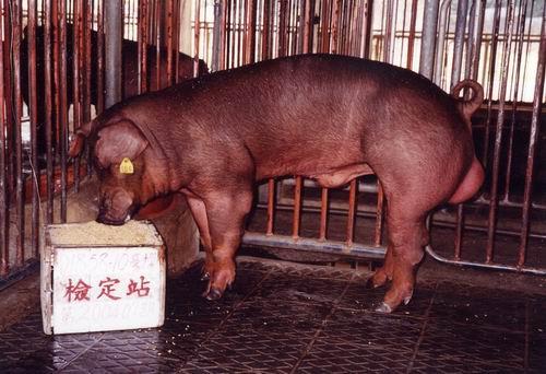 中央畜產會200407期D1858-10拍賣照片