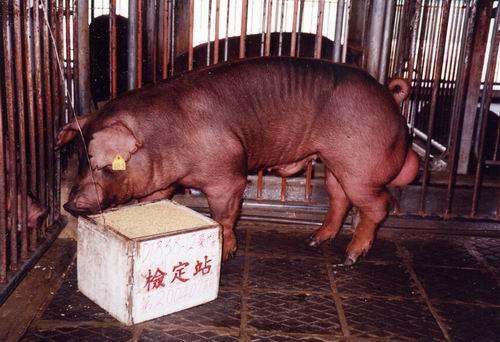 中央畜產會200407期D1858-12拍賣照片