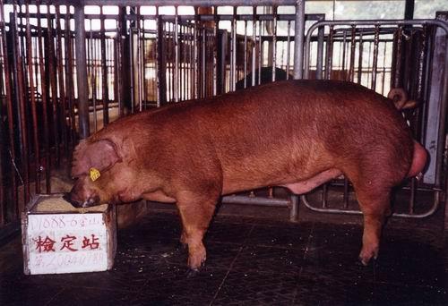 中央畜產會200407期D1888-06拍賣照片