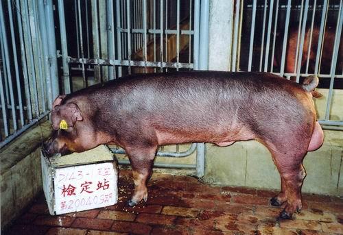 中央畜產會200409期D0143-01拍賣照片