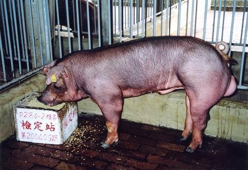 中央畜產會200409期D0280-02拍賣照片