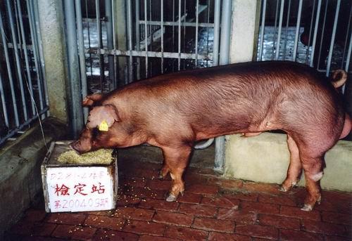 中央畜產會200409期D0281-04拍賣照片