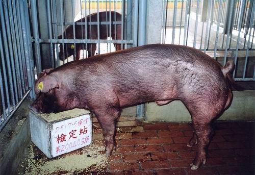中央畜產會200409期D0517-05拍賣照片