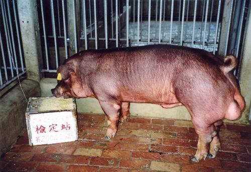 中央畜產會200409期D0806-06拍賣照片