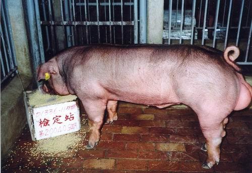 中央畜產會200409期D1336-11拍賣照片