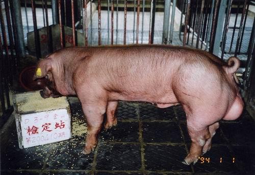 中央畜產會200410期D0003-09拍賣照片