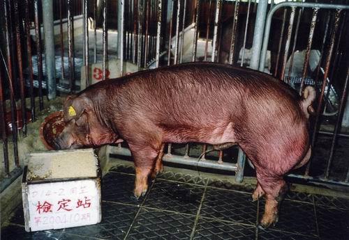 中央畜產會200410期D0014-02拍賣照片