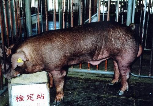 中央畜產會200411期D0434-05拍賣照片