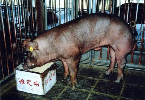中央畜產會200411期D0616-09拍賣照片