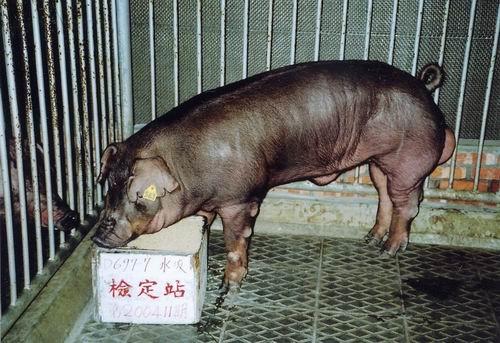 中央畜產會200411期D0697-07拍賣照片