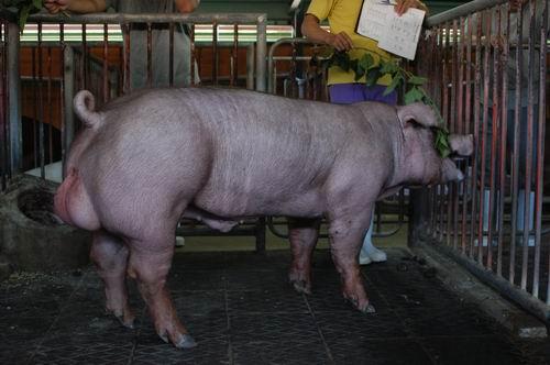 中央畜產會200411期D0846-02體型-全身相片